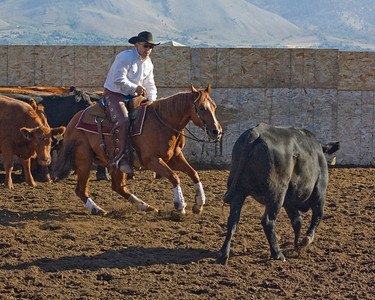 Cutting Horses Meadow Vue Ranch  2008