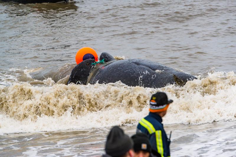 Utqiagvik Whaling-6104308-Juno Kim-nw.jpg