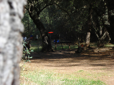 Disc Golf - Hanging Oaks 11-09-2011
