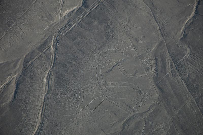 scimmia-nazca (1 di 1).jpg