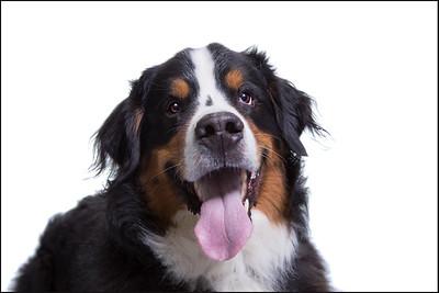 Balrog's studio pet portrait session