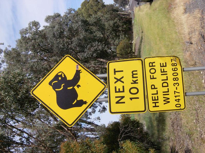 Sydney Canberra 002.JPG