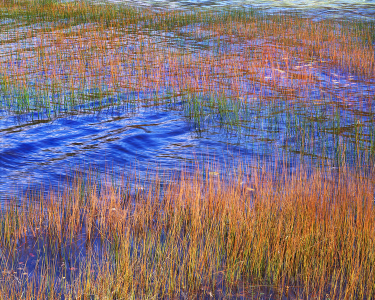 Reeds, Wind and Blue Water II
