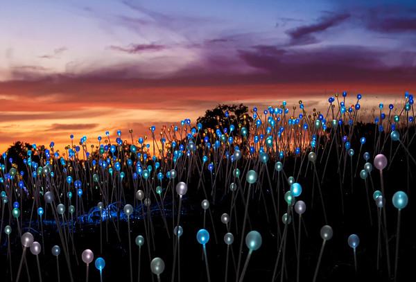 Sensorio: Field of Lights by Bruce Munro in Paso Robles, California