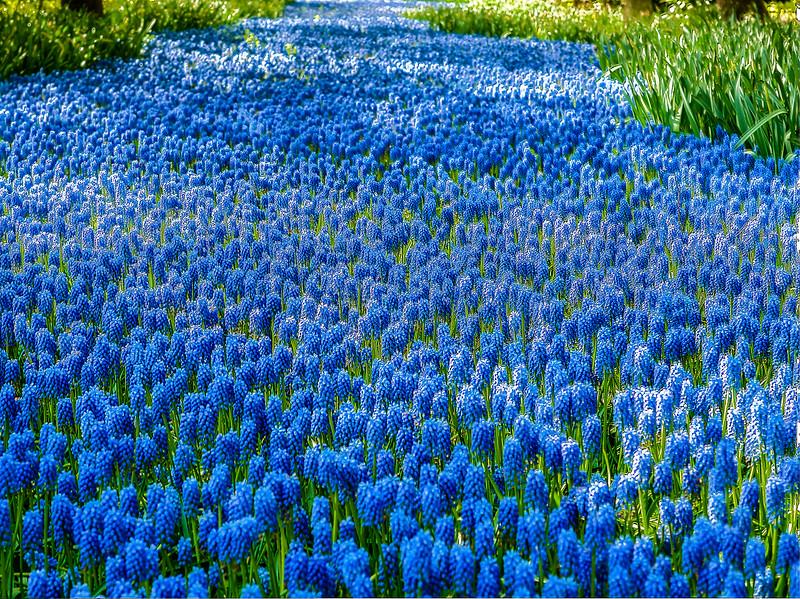 sea of blue.jpg