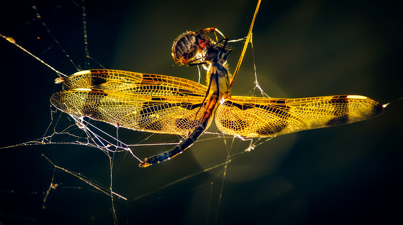 Spiders-Arachnids-001.jpg