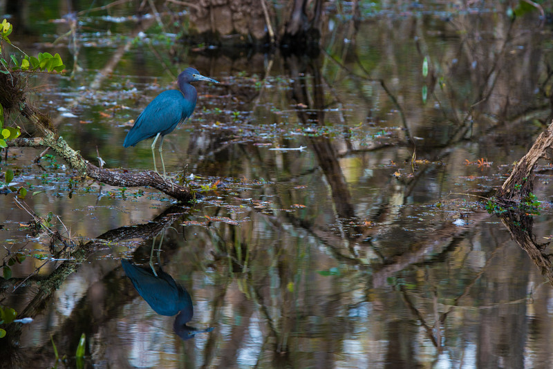 Everglades (7 of 60).jpg