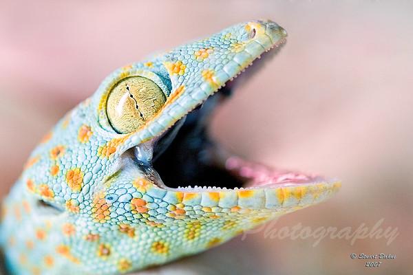 All About Geckos