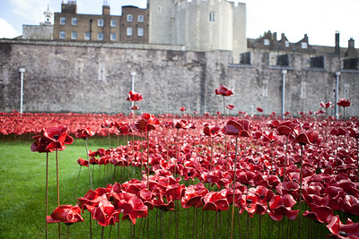 London - Tower of London Poppies