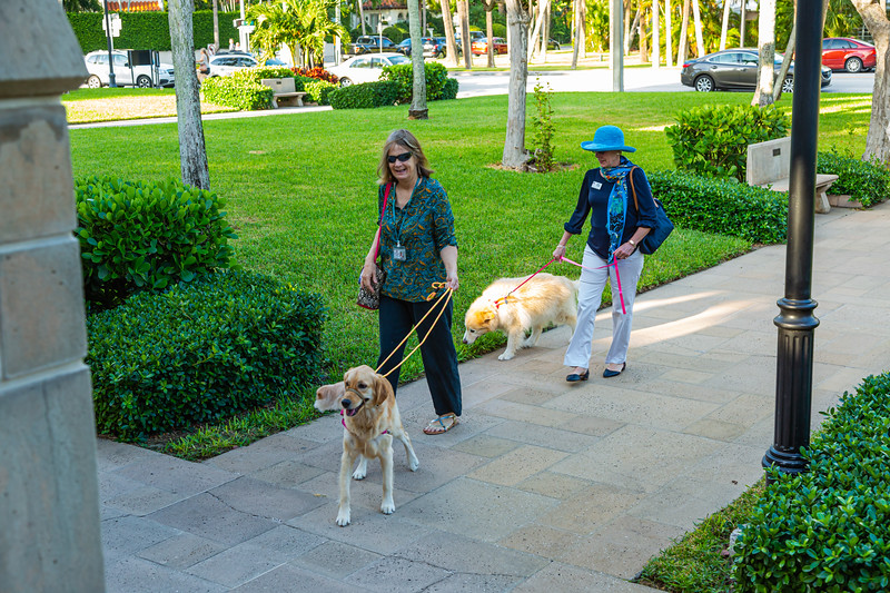 Two women arrive with their dogs at The Church of Bethesda-by-the-Sea in Palm Beach for the annual Blessing-of-the-Animals on Sunday, October 6, 2019. [JOSEPH FORZANO/palmbeachpost.com]