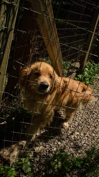 PuppyParty18-337.jpg
