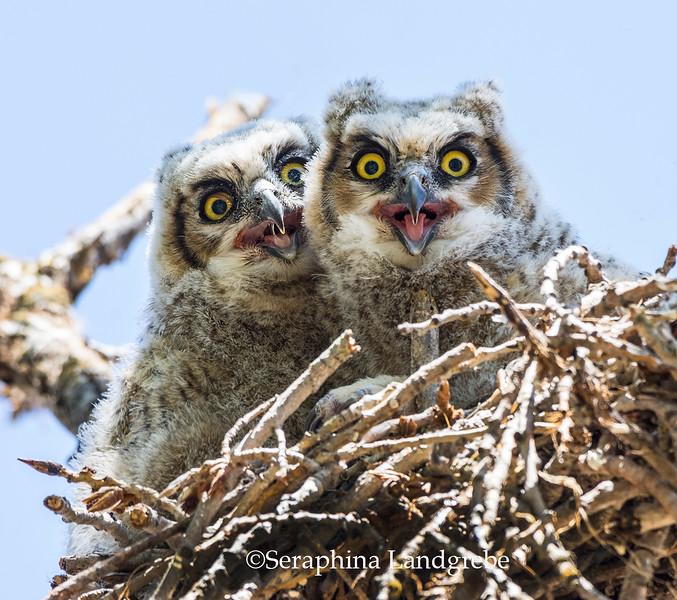_DSC6893Happty baby Owls.jpg