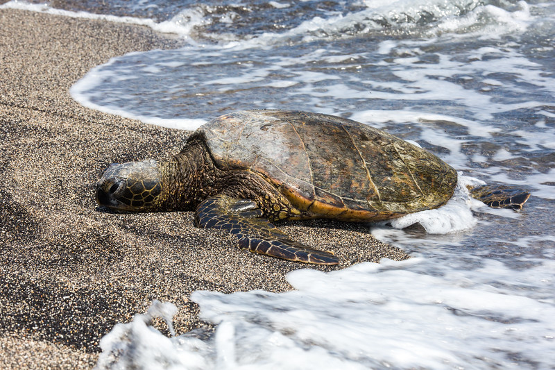 Hawaii - 061412 - 073.jpg