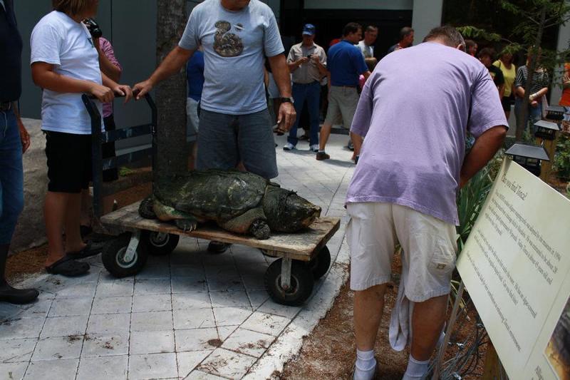 tonka on a cart.jpg