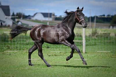 Individual Horses