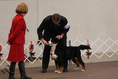 6-9mo Puppy Dog PVBMDC Sunday 2/20/2011