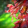 Dried Fall Berries