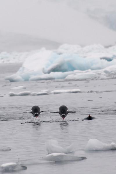 Antarctica 2015 (76 of 99).jpg