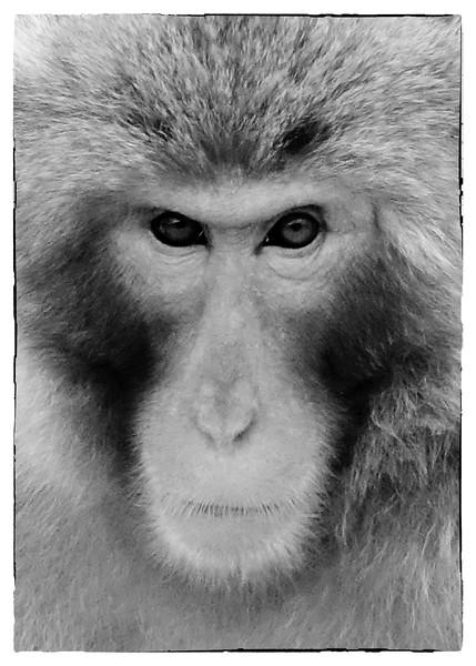 Kyoto Monkeys