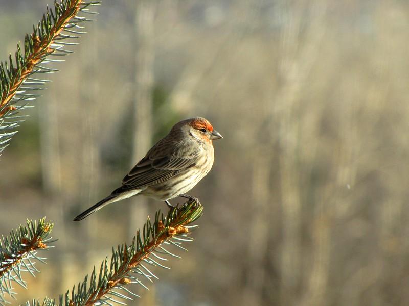 birds (171).jpg