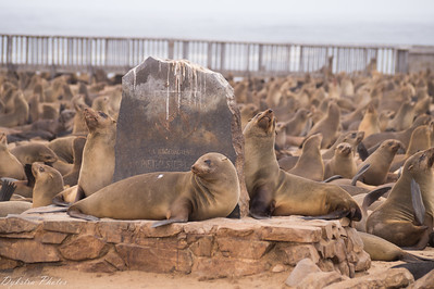 Skeleton Coast + Cape Cross