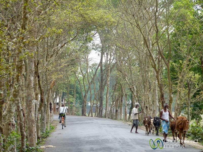 Audrey Rides Bicycle Outside Srimongal, Bangladesh