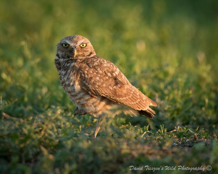 B Owl II_4Z8A3124.jpg