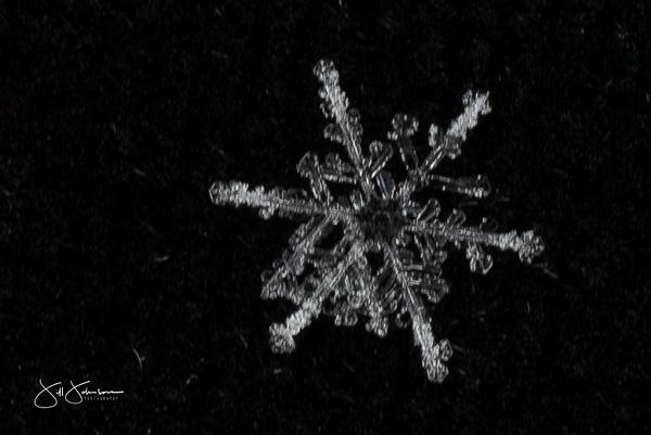 snowflakes-2517.jpg