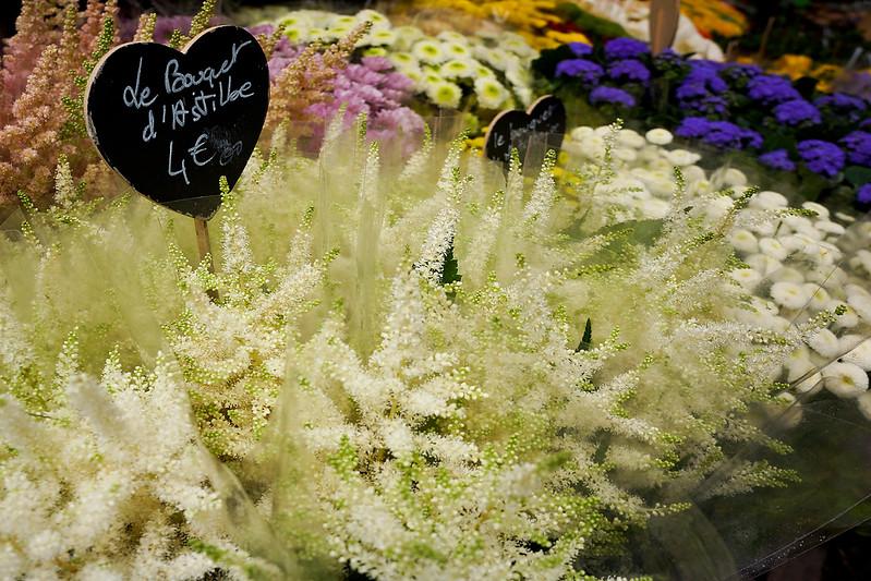 Fleurs 00696.jpg