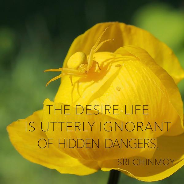 49.the desire life.jpg