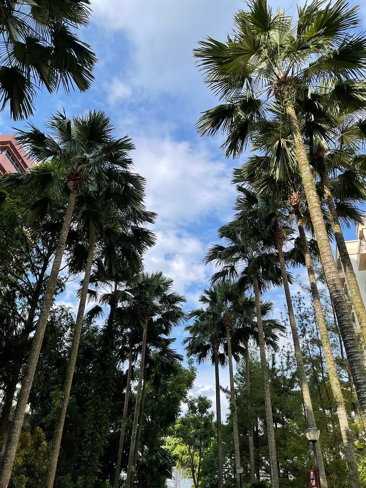 Kallang Park Connector : Potong Pasir to Kallang