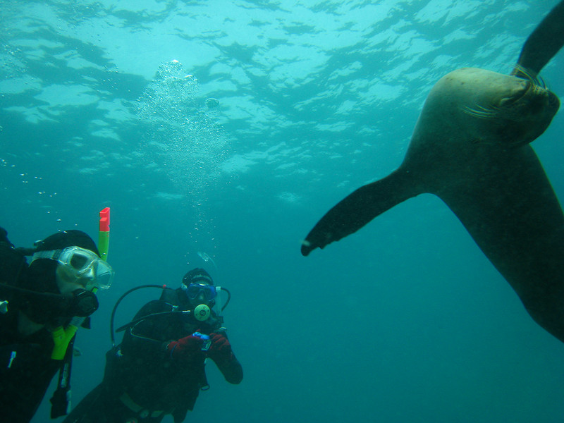 Diving in the Galapagos (292 of 392)