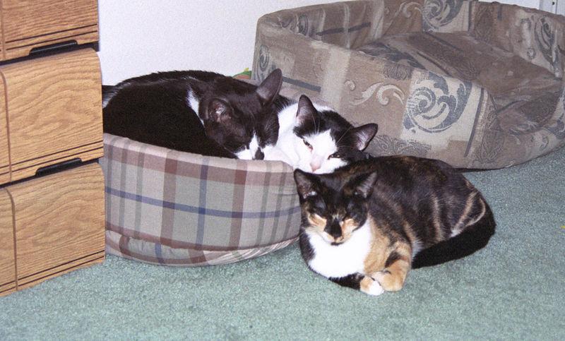 2003 12 - Cats 63.jpg