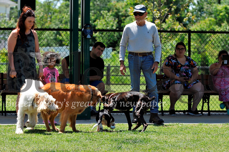 Dogs enjoy a play day in the sunshine Tuesday at Alemeda park while their owners look on. Seb Foltz/Butler Eagle