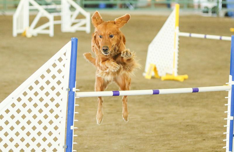 10-31-2015 Border Terrier-3044.jpg