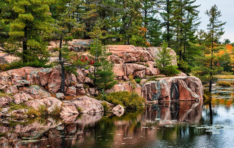 Cranberry Bog, Killarney Prov Park. Nikon D850, 70mm, f8, 1-500. iso 800.jpg