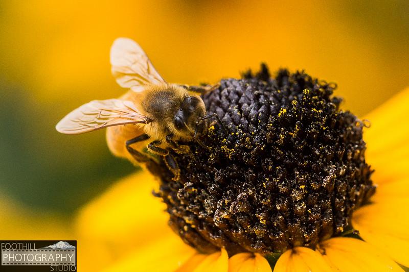 Bee Sml-100.jpg