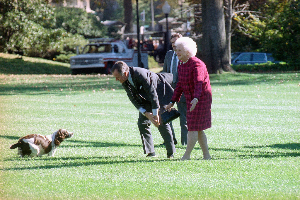 . Pres. George H. W. Bush and First Lady Barbara Bush are greeted at the White House by their dog Ranger, Tuesday, Nov. 6, 1990, Washington, D.C. The President and Mrs. Bush have been on the campaign trail for various candidates across the country for the last six days. (AP Photo/Barry Thumma)