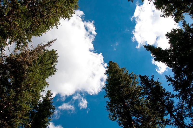 White River forest(1).jpg