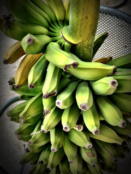 Yes! We have bananas.