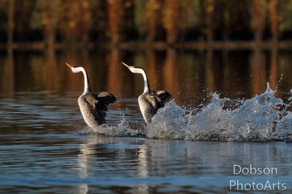 New Water Bird Photos