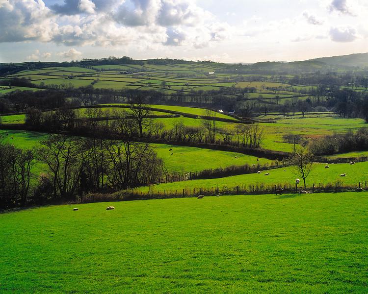 Welsh Green Field.jpg