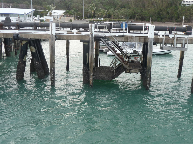 A pier in Shute Harbour, the lower parts covered in shells and other sea creatures.