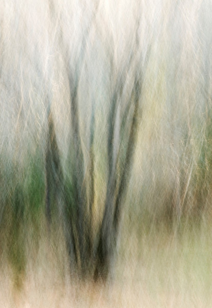 """""""Essence Of A Tree"""".  Moving the camera during a long exposure renders interesting shapes and patterns."""