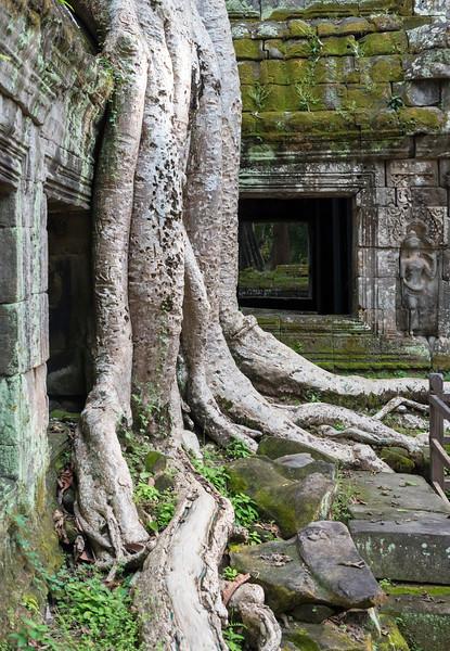 Ta Prohm Temple, Angkor