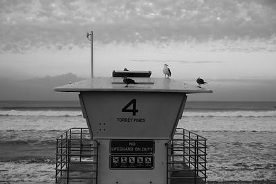 20181211 | Leica M9 | Summilux | Torrey Pines State Beach