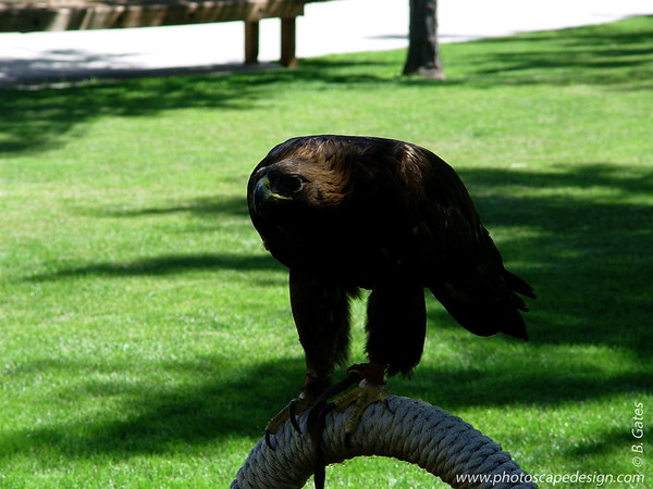 The Peregrine Fund's World Center for Birds of Prey - Boise: 2011