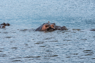 Chobe River_3554-Edit