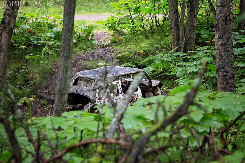 Kincaid Park Car-2-2.jpg