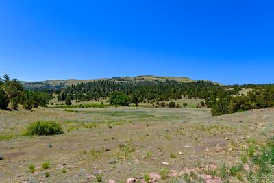 Bare Hills